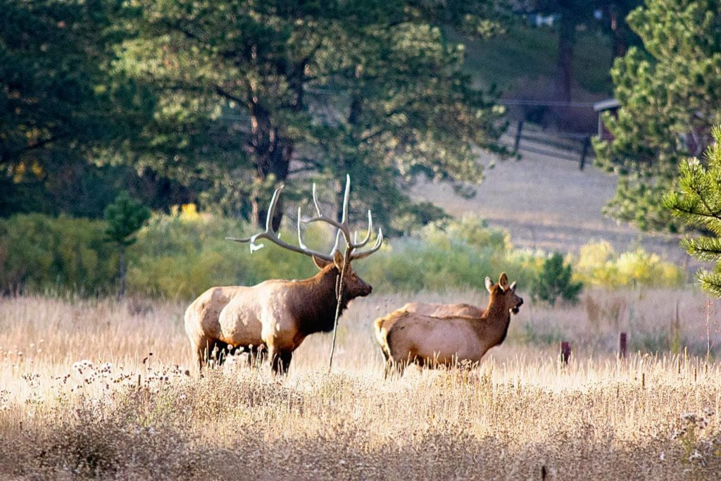 elk ranches for sale