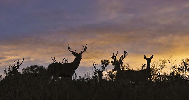 Uruguay Hunting Lodge