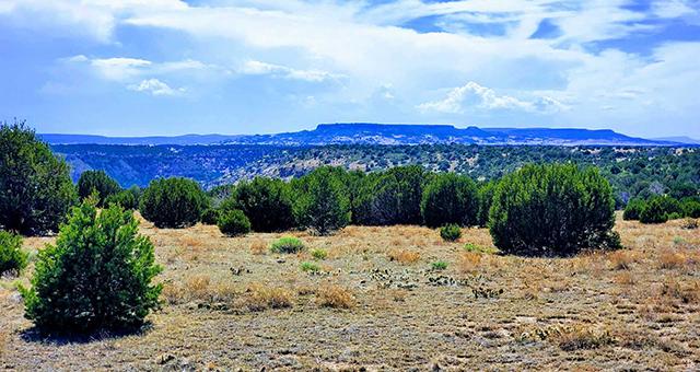 Long Canyon Ranch
