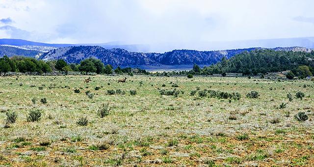Sanctuary Ranch